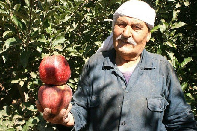 farmer and apples