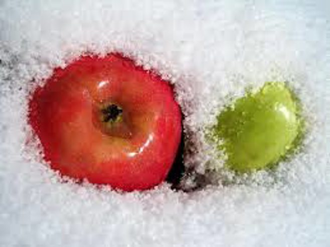 apples in snow