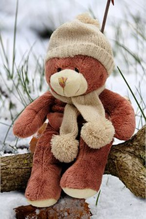 beary cold.alert1 medical alert systems