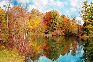 Lake during Autumn