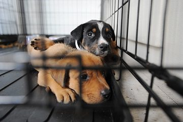 cute puppies in cage