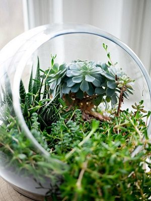 Succulents in glass container