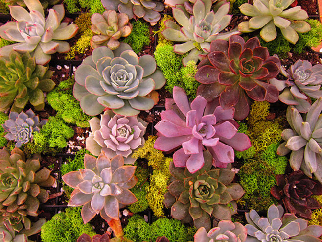 varieties of succulents