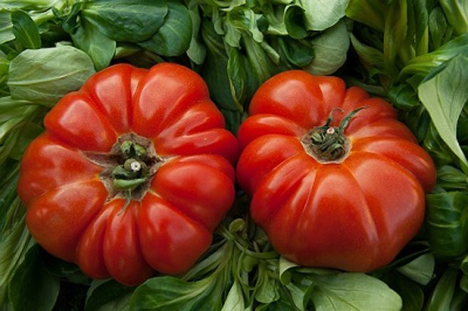 red tomatoes.alert1 medical alert systems